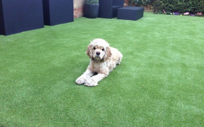 Artificial Grass installation in Weybridge, Surrey